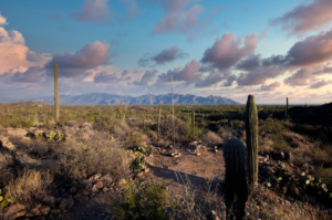 saguaro ranch south - Courtesy of Help U Sell Galleria Realty